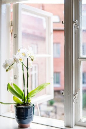 Orkidée i fönster
