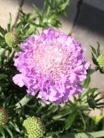 Bild: Fröken Wiolas Blomsterverkstad - blomma