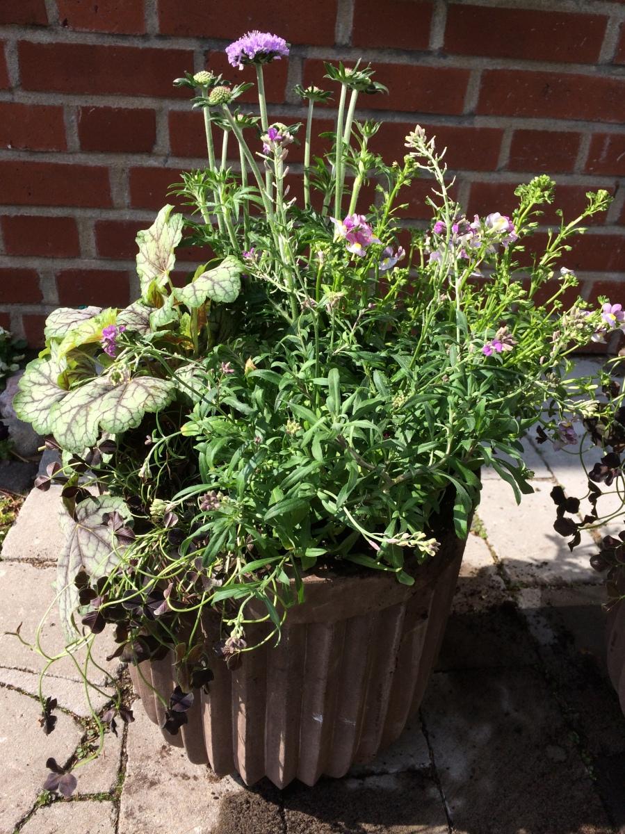 Bild: Fröken Wiolas Blomsterverkstad - plantering