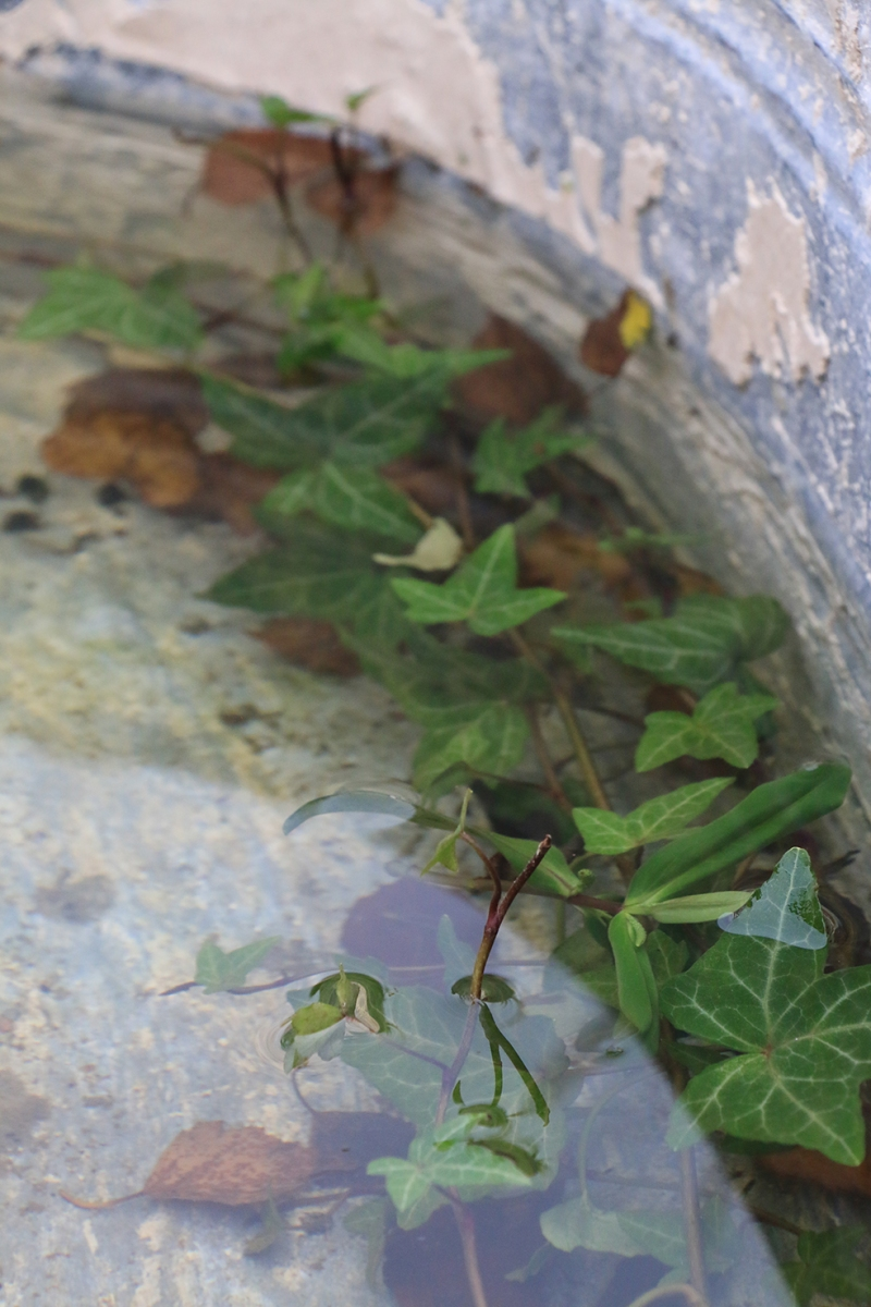 Utomhus finns också prylar att botanisera bland. Vackra ting med patina.