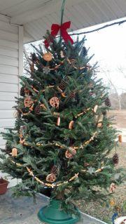 Fåglarna blir glada för lite julgranspynt! Bild lånad från Greta H
