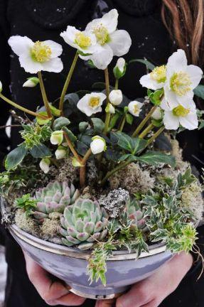 Bild hittad på Pinterest och lånad från: liljorochtulpaner.blogspot.com