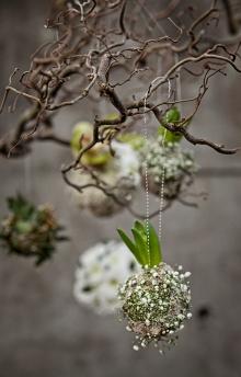 Bild hittad på Pinterest och lånad från: Plantasjen