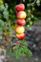 Pimpade äpplen på tråd! Fint pynt i trädgården! Bild lånad från Titti Malmberg Photography
